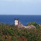 Sea Horse by ConnemaraPony