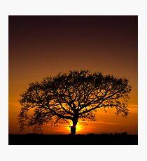 Baobab Photographic Print
