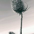 Thistle by Sarah Vance