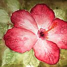 Pretty Hibiscus  by fixtape