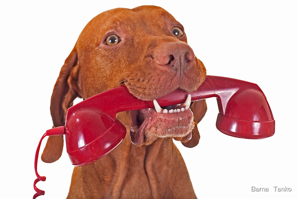 dog with red phone by Barna   Tanko