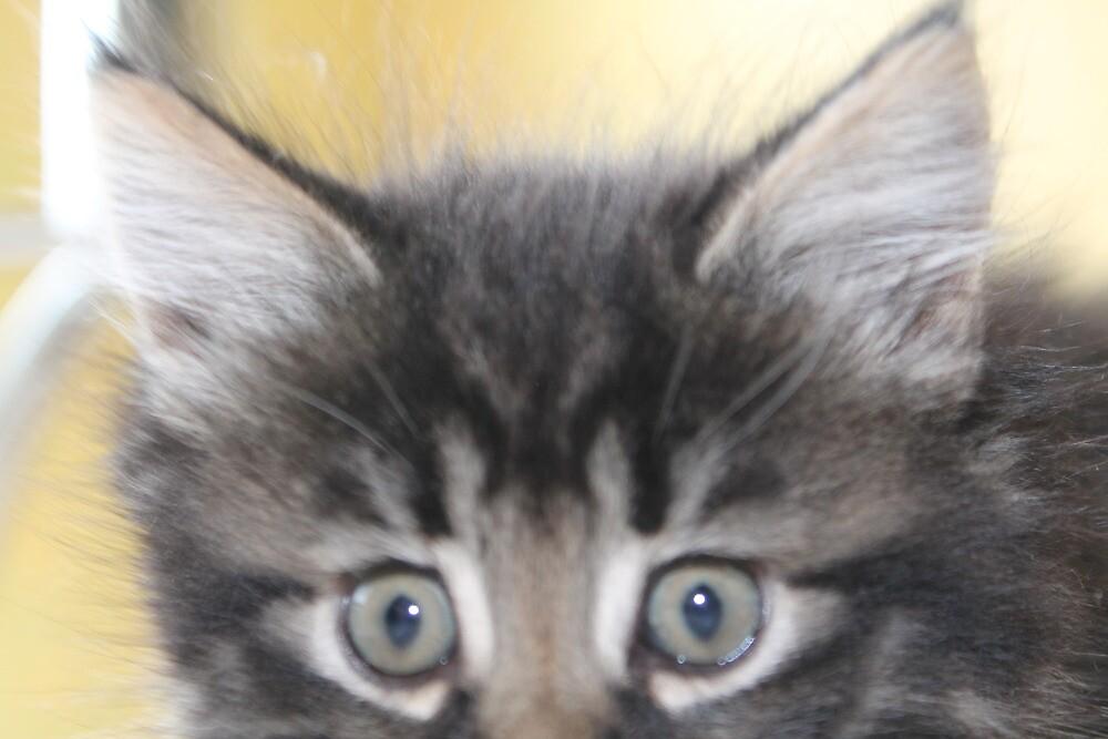 Kitten by wadey61