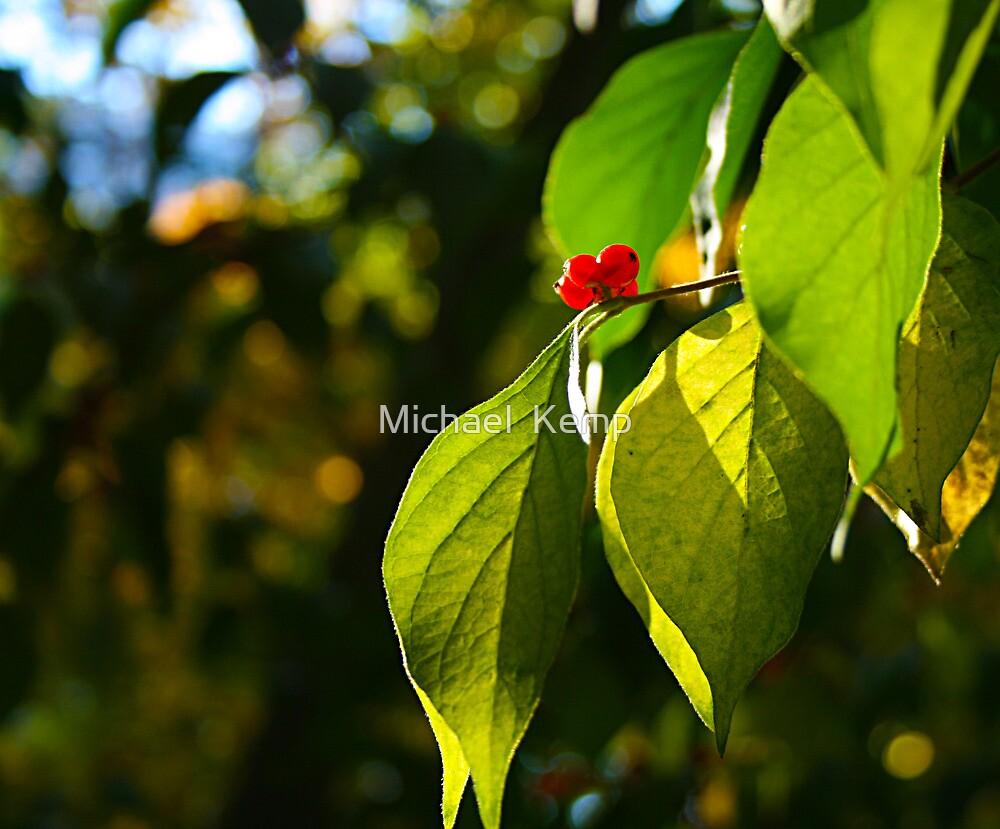 Fall Berries by Michael  Kemp