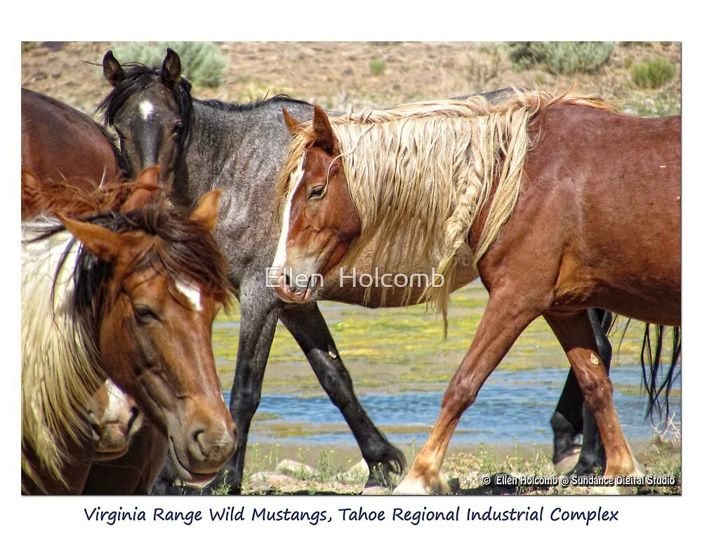 Virginia Range Wild Horses, TRI, Nevada by Ellen  Holcomb