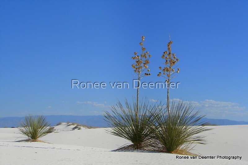 White Desert Sands by Ronee van Deemter