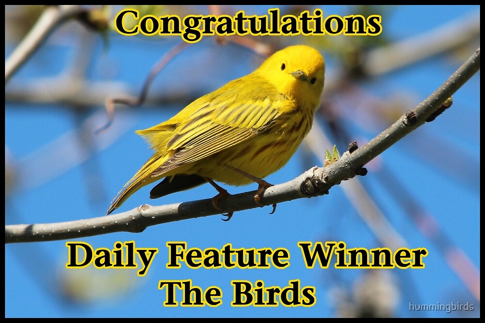 The Birds Feature Banner by hummingbirds