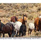 Herd of Wild Mustangs, Virginia Range, NV by Ellen  Holcomb