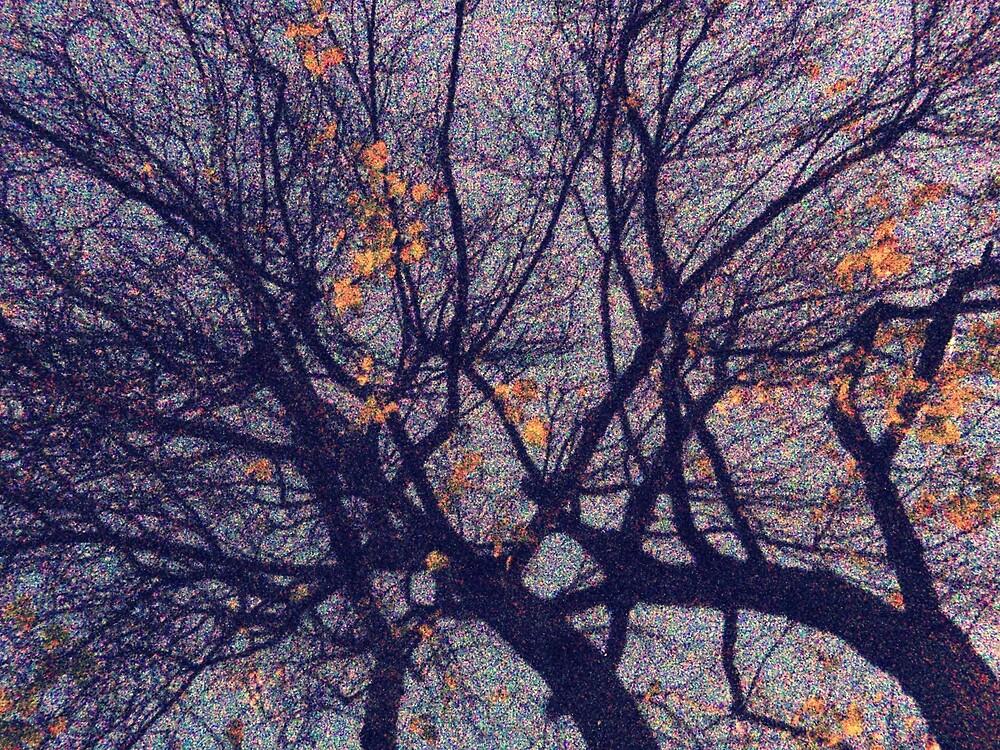 A tree at night by tanyamatheson
