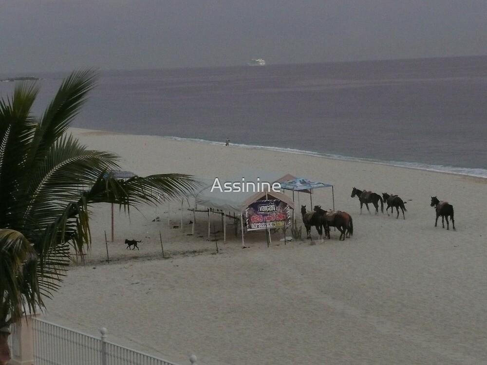 Horses on the beach by Assinine