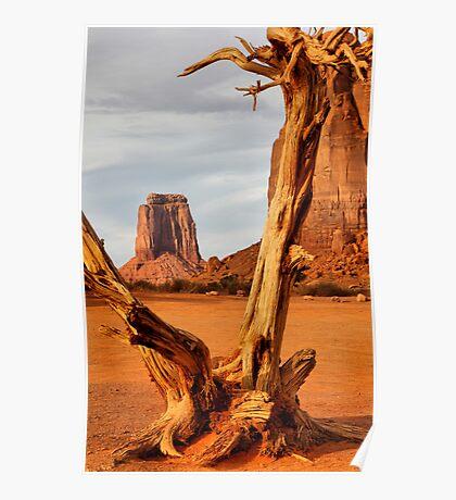 Gnarled tree at North Window Poster