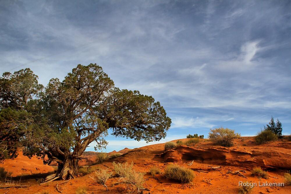 Juniper  tree in Mystery Valley by Robyn Lakeman