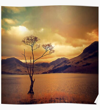 Famous Tree of Lake Buttermere Poster