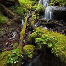 Fairy Falls VI by Tula Top