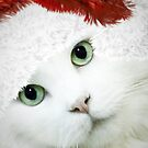 Wrapping Presents 101 for Cat Owners by ibjennyjenny