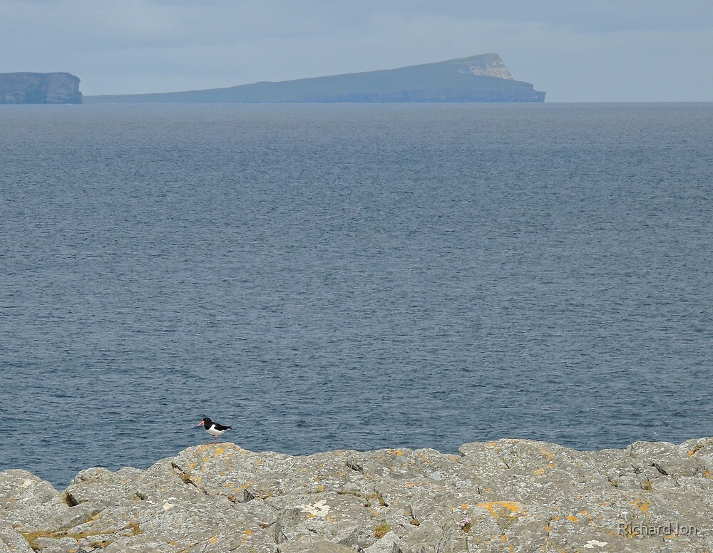 Noss from Mousa, Shetland by Richard Ion