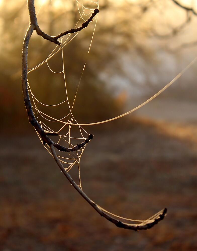 Misty Morning Website by Carolyn  Fletcher