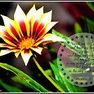 Psalm 139:23-24 by Mandy Roberts