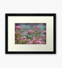 pastel flowers Framed Print