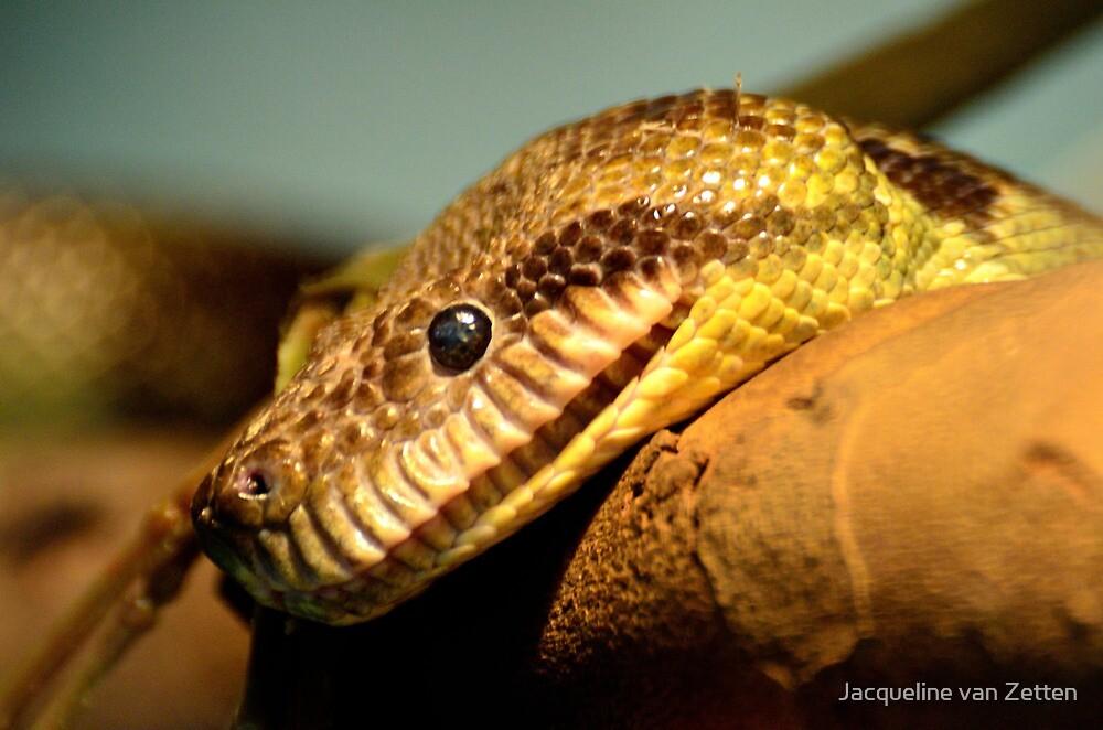 Python by Jacqueline van Zetten