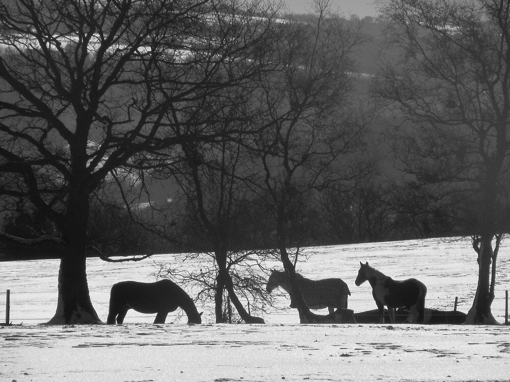 Wild Horses in Snowy Fields by TheHolyGoof