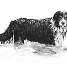 Dog in Water - Boarder Collie by Paul Stratton