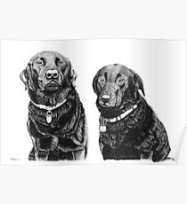 Josh and Toby - Black Labradors Poster