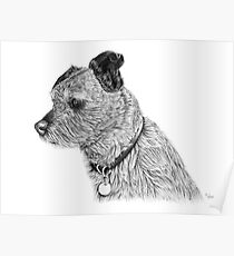 Raggy dog - Terrier Poster