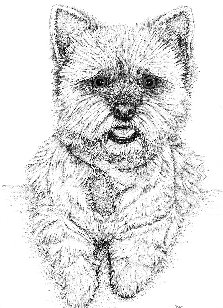 Westie - West Highland Terrier by Paul Stratton