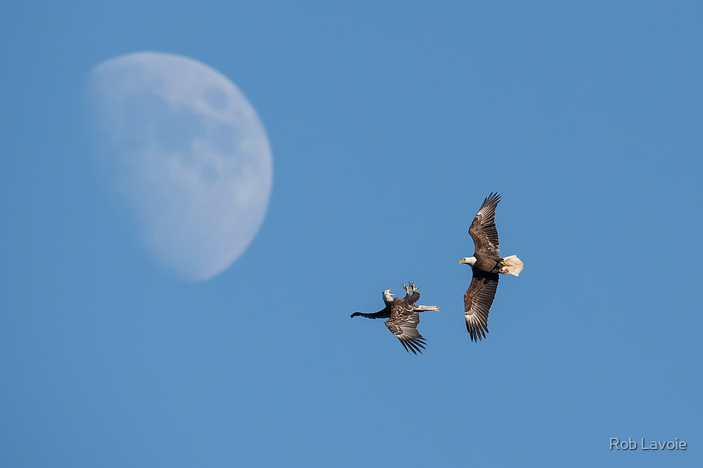 Eagle Moon by Rob Lavoie