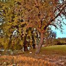 Autumn Swans by Linda Miller Gesualdo