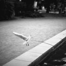 #NeinGrenze - bw Wings by OLIVER W