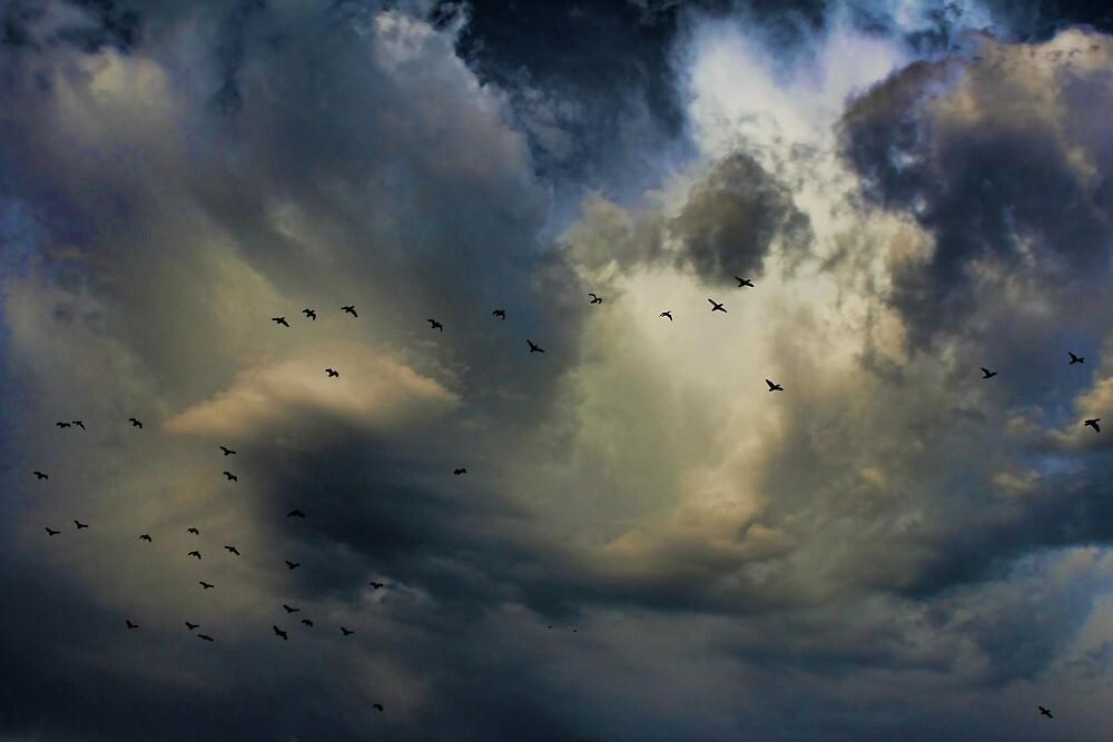 Cloud 20121111-54 by Carolyn  Fletcher
