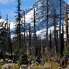 Mt. Hood Oregon by Leighanna Murray
