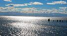 Across the Bay by John Schneider