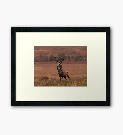 Monarch Of The Glen Framed Print