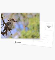 Kookaburra Watching Postcards