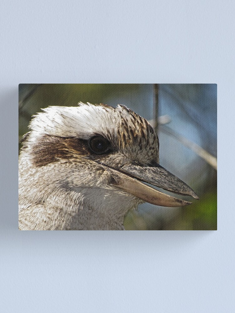 Alternate view of Kookaburra Portrait Canvas Print