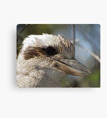 Kookaburra Portrait Metal Print