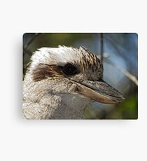 Kookaburra Portrait Canvas Print