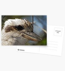 Kookaburra Portrait Postcards