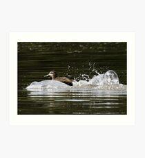 Splashdown!   Art Print