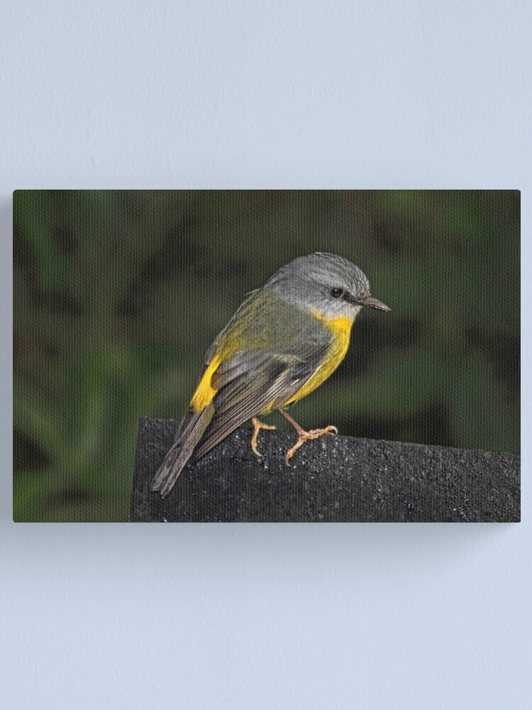 Alternate view of Eastern Yellow Robin Canvas Print