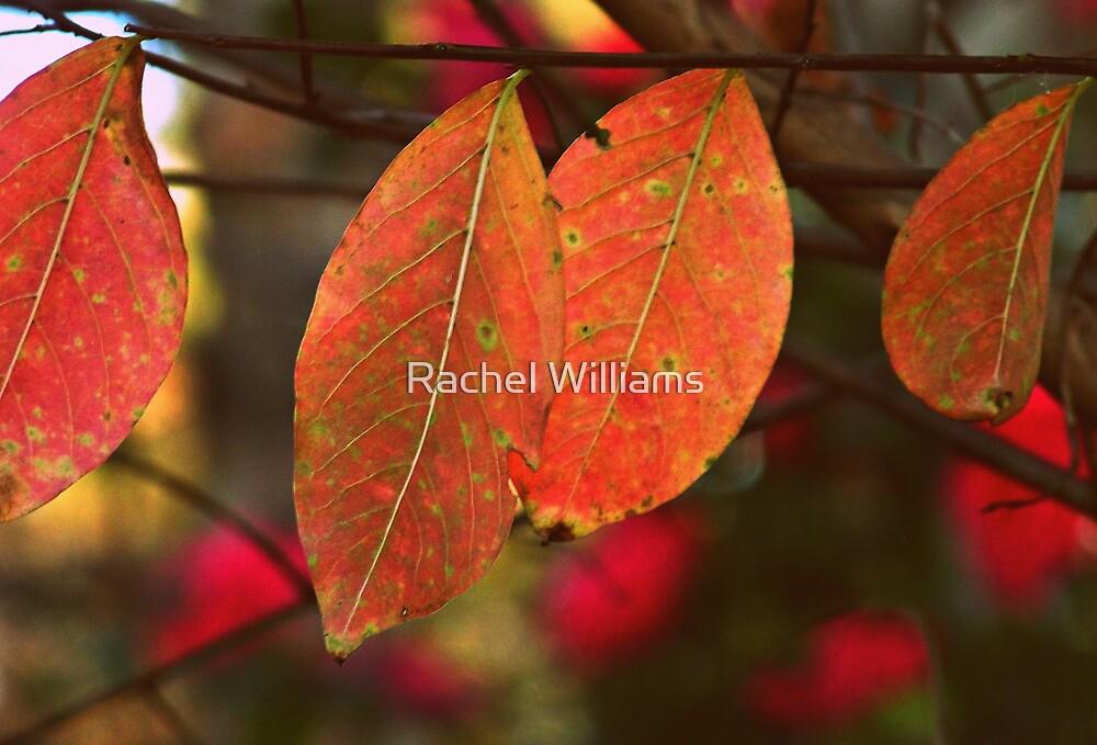 Autumn Fire by Rachel Williams