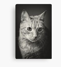 Old Red Tabby Mackerel Cat Canvas Print