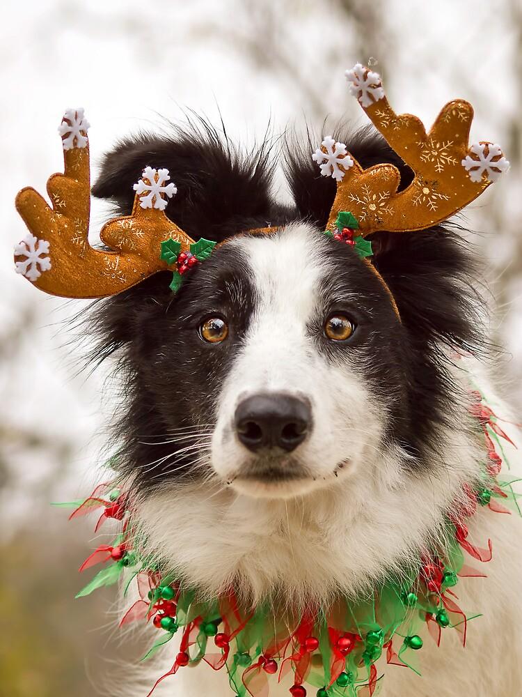 Reindeer Collie by ZebsterBC