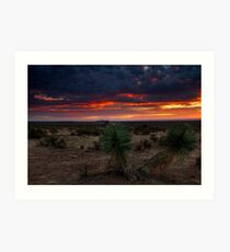 Yucca  Tree Sunset(View Large) Art Print
