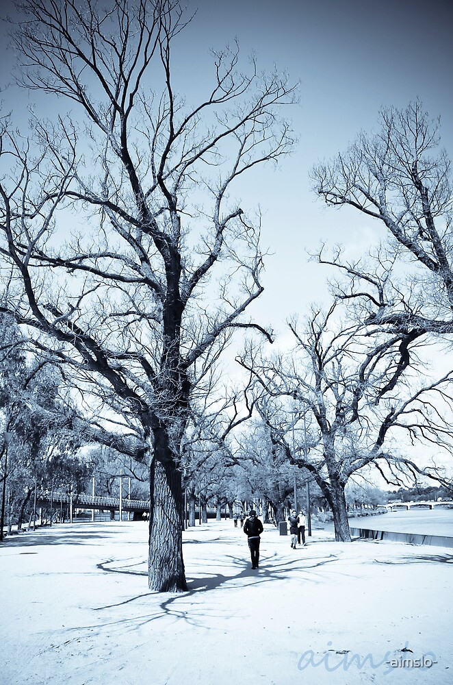 Trees Along The Yarra by -aimslo-