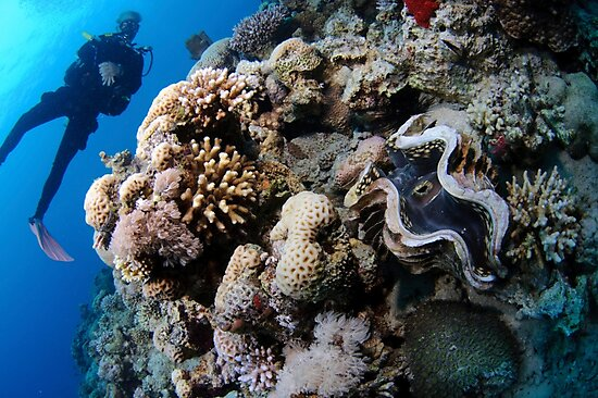 Underwater photography of a large clam in a coral reef by PhotoStock-Isra