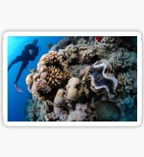Underwater photography of a large clam in a coral reef Sticker