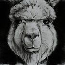 Alpaca in black and white by gogston